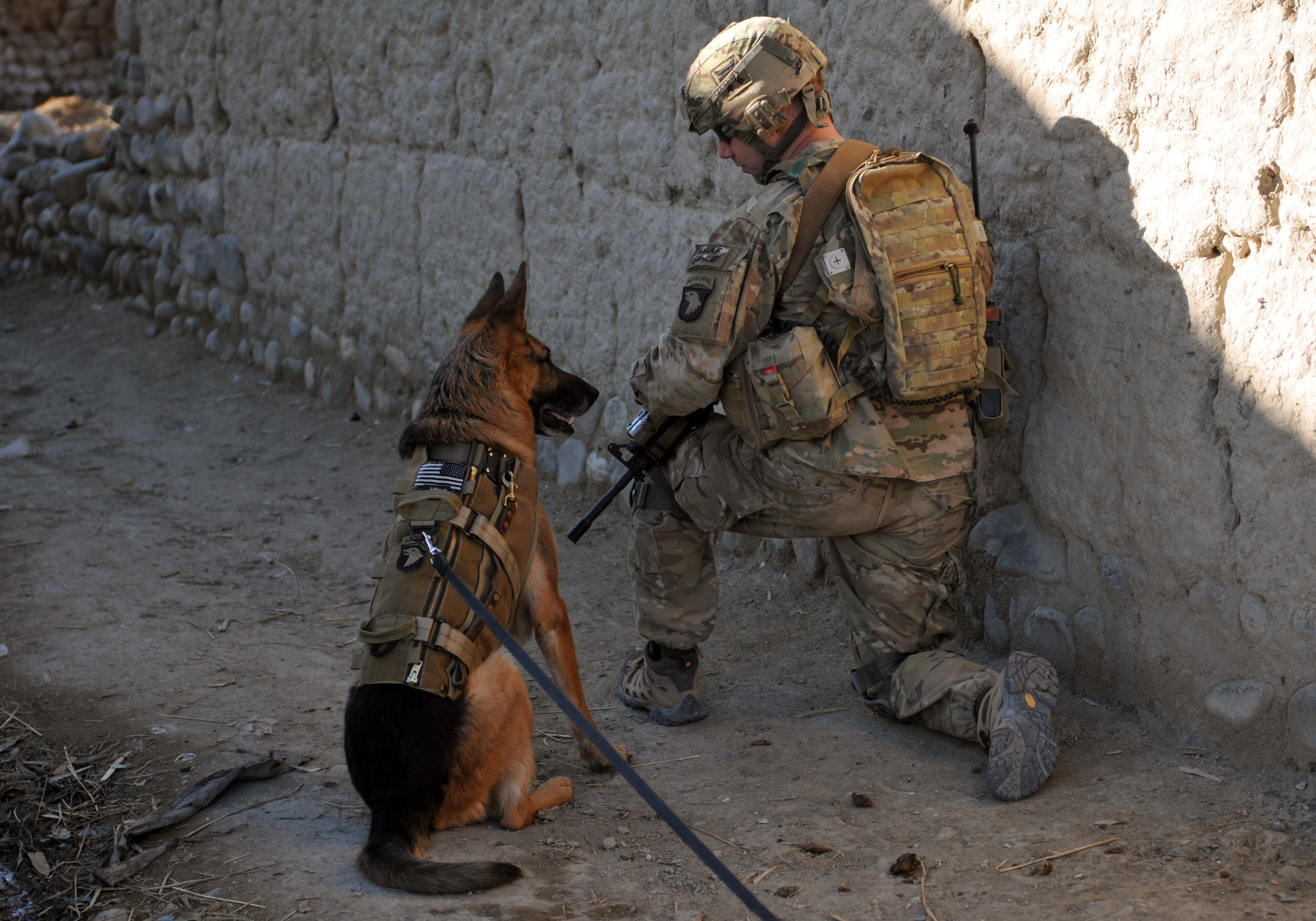 """U.S. Army 1st Sgt. Brian Zamiska, the company first sergeant for Delta Company, 3rd Battalion, 187th Infantry Regiment, 3rd Brigade Combat Team """"Rakkasans,"""" 101st Airborne Division (Air Assault), pulls security with a U.S. Air Force working dog, Jan. 6, 2013, during a patrol with the Afghan Border Police in Tera Zeyi district, Afghanistan. The ABP were looking for locals suspected of creating improvised explosive devices. (U.S. Army photo by Spc. Alex Kirk Amen, 115th Mobile Public Affairs Detachment)"""
